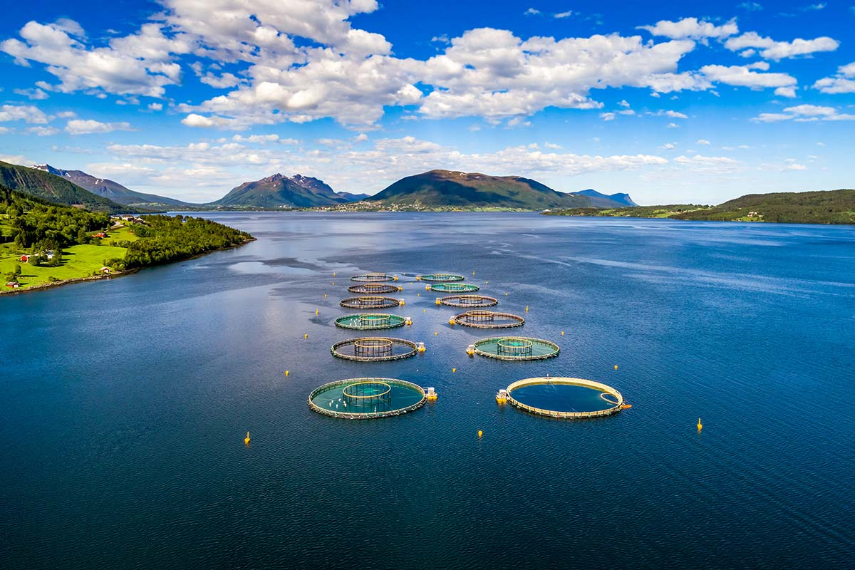 Aquaculture outdoor fishery | Alpha_Purify